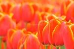 Die Freude des Frühlings