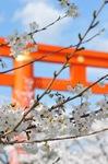 Das Frühlingserwachen - Kyoto Japan